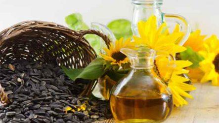 Чем полезны подсолнечные семечки: щелкай и укрепляй здоровье
